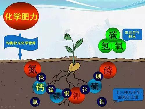 中微肥化学助力.jpg
